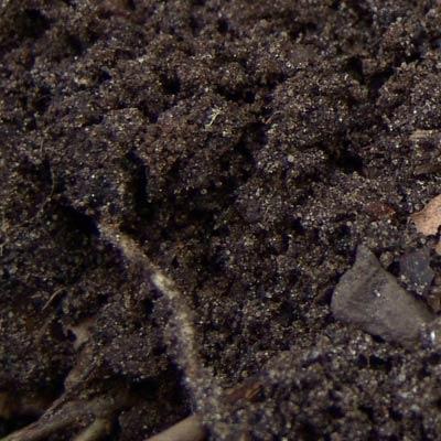 SHA topsoil