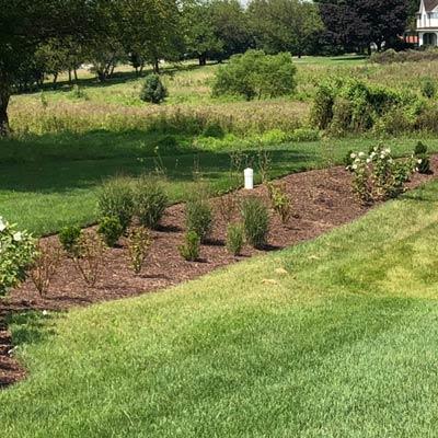 rain garden soil