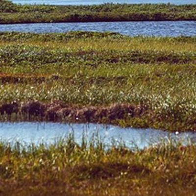 wetland soil